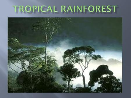 Tropical rainforests are found closer to the equator where it is warm.