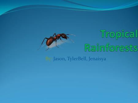 By: Jason, TylerBell, Jenaisya Labeled picture canopy Forest floor emergent.