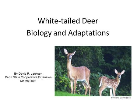 White-tailed Deer Biology and Adaptations By David R. Jackson Penn State Cooperative Extension March 2008 PA Game Commission.