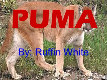 PUMA By: Ruffin White. VIDEO Click HEREHERE Physical traits It has sharp teeth and sharp claws to defend them selves from predators.