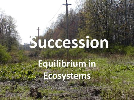 Equilibrium in Ecosystems