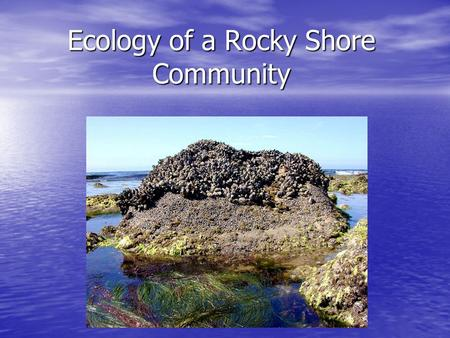Ecology of a Rocky Shore Community. Zones of Life along a Rocky Shore Why are some animals and plants located in special zones and not all over? Why are.