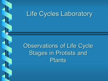 Life Cycles Laboratory Observations of Life Cycle Stages in Protists and Plants.