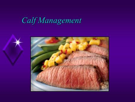 Calf Management. Cow-Calf Management u Definition- breeding of cows and raising of calves. u commercial or purebred u stockers u facilities u shelter.