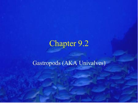 "Chapter 9.2 Gastropods (AKA Univalves). Gastropods Traits Gastropods = ""stomach foot"" Univalve = ""one-shelled"" Includes the snails, whelks, abalone, slipper."