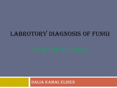 LABROTORY DIAGNOSIS OF FUNGI PRACTICAL NO(3) DALIA KAMAL ELDIEN.