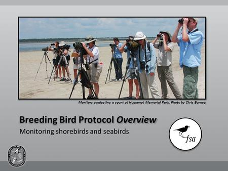 Breeding Bird Protocol Overview Monitors conducting a count at Huguenot Memorial Park. Photo by Chris Burney. Monitoring shorebirds and seabirds.