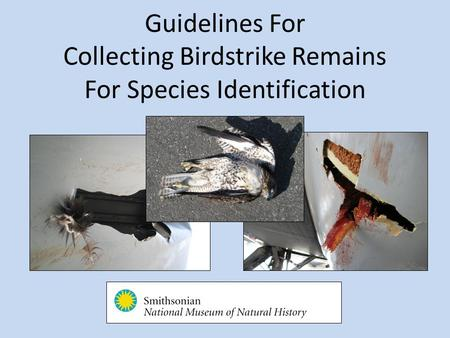 Guidelines For Collecting Birdstrike Remains For Species Identification.