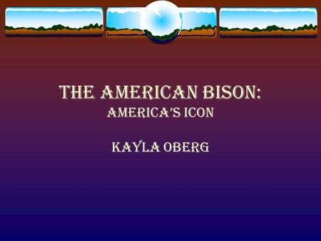 The American Bison: America's Icon