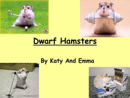 Dwarf Hamsters By Katy And Emma.