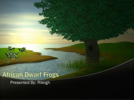 African Dwarf Frogs Presented By: Rileigh.