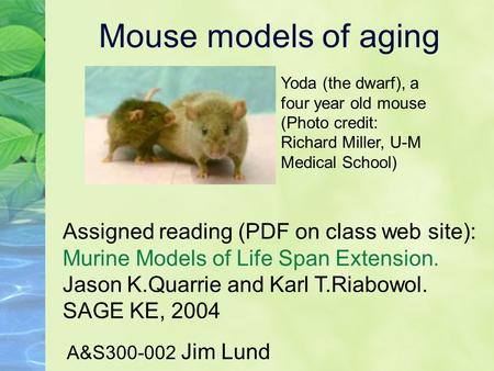 Mouse models of aging A&S300-002 Jim Lund Assigned reading (PDF on class web site): Murine Models of Life Span Extension. Jason K.Quarrie and Karl T.Riabowol.