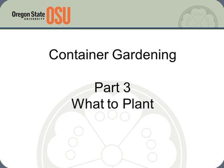 Container Gardening Part 3 What to Plant