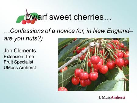 …Confessions of a novice (or, in New England– are you nuts?) Jon Clements Extension Tree Fruit Specialist UMass Amherst Dwarf sweet cherries…