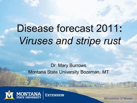 Disease forecast 2011: Viruses and stripe rust Dr. Mary Burrows Montana State University Bozeman, MT.