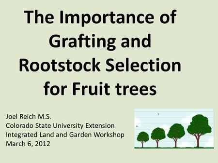 The Importance of Grafting and Rootstock Selection for Fruit trees