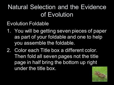 Natural Selection and the Evidence of Evolution Evolution Foldable 1.You will be getting seven pieces of paper as part of your foldable and one to help.