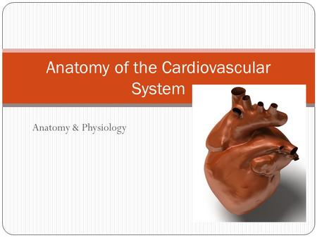 Anatomy of the Cardiovascular System