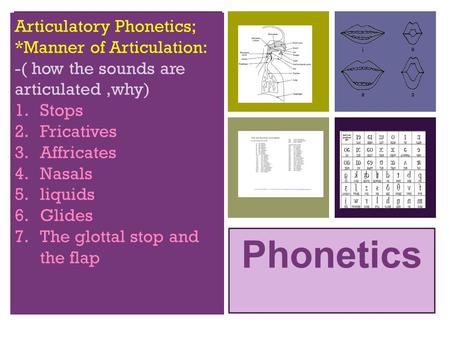 + Phonetics Articulatory Phonetics; *Manner of Articulation: -( how the sounds are articulated,why) 1.Stops 2.Fricatives 3.Affricates 4.Nasals 5.liquids.