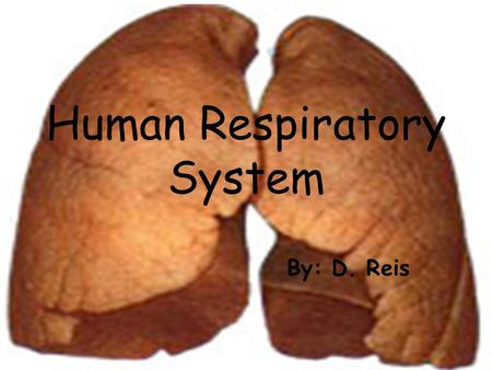 Human Respiratory System By: D. Reis. The Respiratory System Air enters the respiratory system through both the nasal cavity and mouth. The nasal cavity.