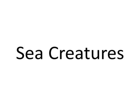 Sea Creatures crab dolphin turtle fish.