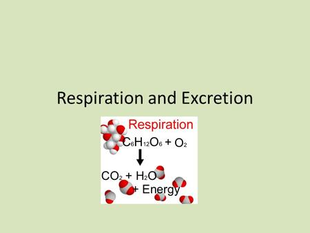 Respiration and Excretion. Respiration The Respiratory System A.Functions of the respiratory - supply oxygen to the body. 1. Breathing is the movement.