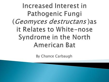 By Chance Carbaugh.  Origin and discovery of Geomyces destructans  Information about Geomyces destructans  Impact of the fungus on host bats.
