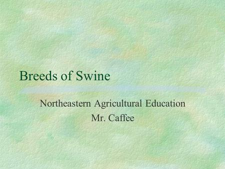 Breeds of Swine Northeastern Agricultural Education Mr. Caffee.