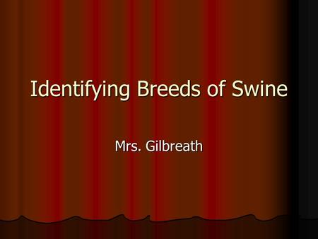 Identifying Breeds of Swine Mrs. Gilbreath Today you should be able to… Identify characteristics of major swine breeds. Identify characteristics of major.