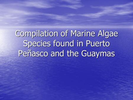 Compilation of Marine Algae Species found in Puerto Peñasco and the Guaymas.