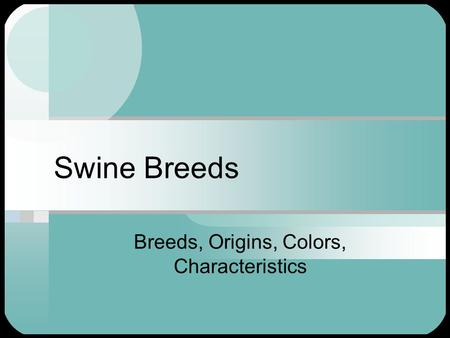 Swine Breeds Breeds, Origins, Colors, Characteristics.