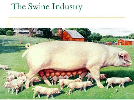 The Swine Industry. Swine (Pig) Production.