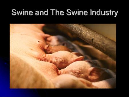 Swine and The Swine Industry. Origin and Domestication of Swine Today's swine originated from: European Wild Boar – still exist in Europe Black and gray.
