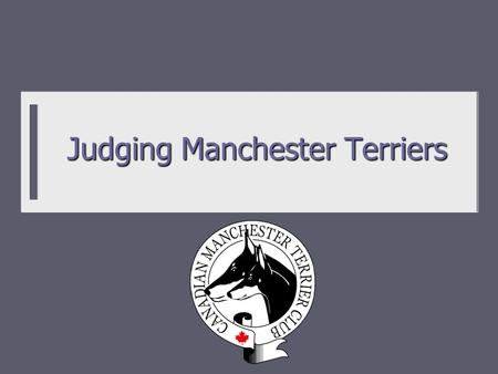 Judging Manchester Terriers. History and Background  Black and tan coloured terriers documented back to Tudor times and likely before.