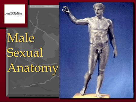 Male Sexual Anatomy.