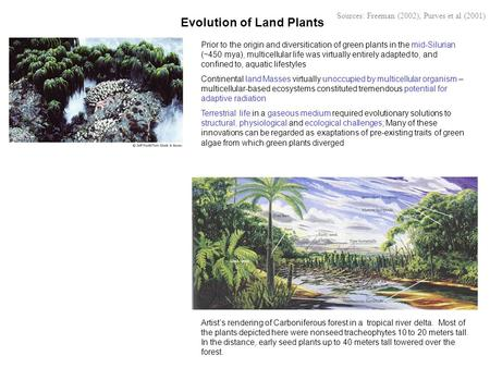 Evolution of <strong>Land</strong> Plants Artist's rendering of Carboniferous forest in a tropical river delta. Most of the plants depicted here were nonseed tracheophytes.