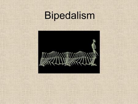 Bipedalism. Bipedalism - on two feet. The single most distinctive feature of Hominids Hominid bipedalism is habitual and required.
