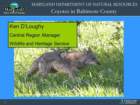 Coyotes in Baltimore County 11 Name of Presentation Date of Presentation Image or Graphic  Ken D'Loughy Central.