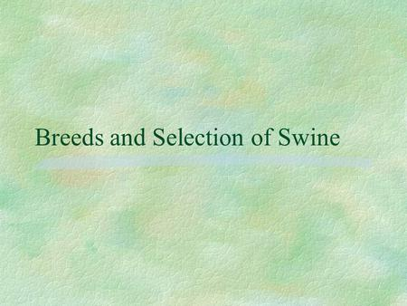 Breeds and Selection of Swine Terms: §Swine: mammal in the family Suidae. Domesticated species grown for their edible flesh and fat, for their hides.