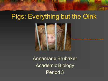 Pigs: Everything but the Oink Annamarie Brubaker Academic Biology Period 3.