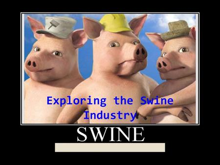 Lesson Exploring the Swine Industry. Bell: What questions do you have about pigs?