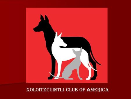 "XOLOITZCUINTLI CLUB OF AMERICA. Breed Origins In 1785 the Naturalist, Buffon, reports the following information: ""The first and largest of these American."