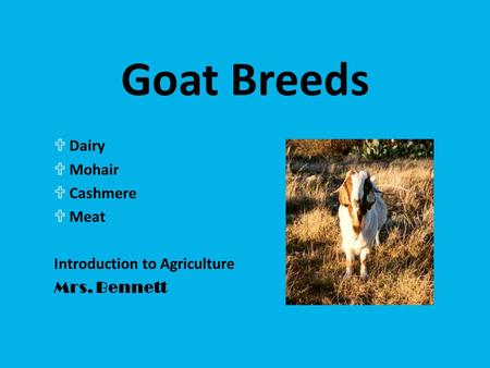 Goat Breeds UDairy UMohair UCashmere UMeat Introduction to Agriculture Mrs. Bennett.