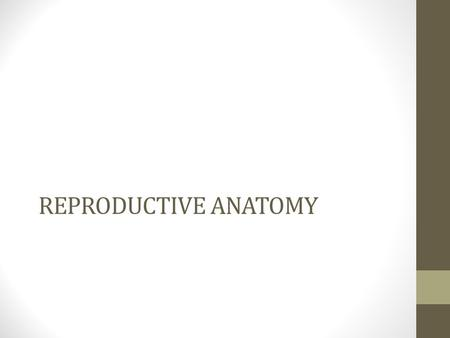 REPRODUCTIVE ANATOMY.