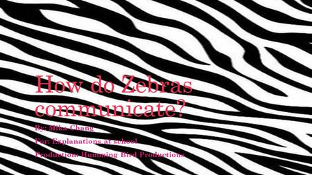 How do Zebras communicate? By: Mika Chang For: Explanations at school Production: Humming Bird Productions.