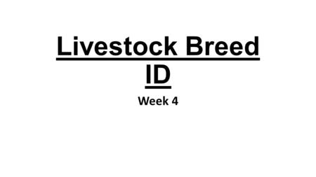 Livestock Breed ID Week 4. Berkshire Origin – County seat of the shire of Berks in England Use – Pork Color/marking Black White tip on tail White from.