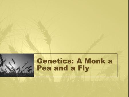 Genetics: A Monk a Pea and a Fly. Mendel and His Peas Born in Czech Republic in 1822 Studied math in Vienna Was in charge of the monastery garden Conducted.