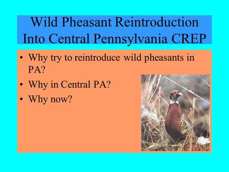 Wild Pheasant Reintroduction Into Central Pennsylvania CREP Why try to reintroduce wild pheasants in PA? Why in Central PA? Why now?