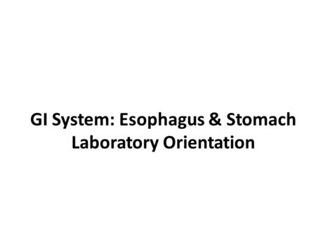 GI System: Esophagus & Stomach Laboratory Orientation.