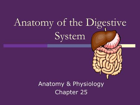 Anatomy & Physiology Chapter 25 Anatomy of the Digestive System.